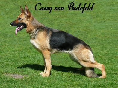 Cassy von Bödefeld