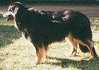 Bionda von Arminius