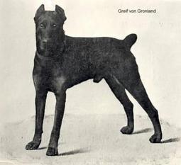 Greif von Grönland