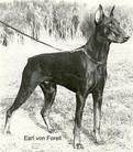 Earl von Forell