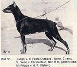 Gogo von der Veste Otzberg