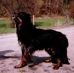 Alf vom Schondratal