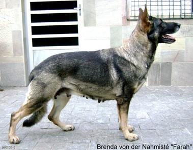 Brenda von der Nahmisté