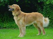 Argus ex canis Lupus