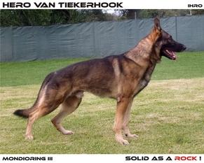 Hero van Tiekerhook (2007)