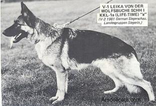 Leika von der Wolfsbuche