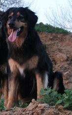 Quassia (LOI 01/172106)