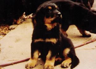 Max vom Schondratal