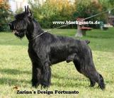 Zarina's Design Fortunato