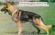 Ulk vom Bungalow