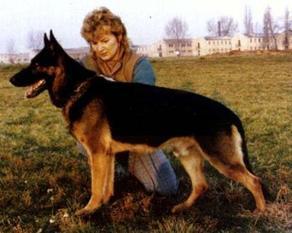 Gildo vom Körbelbach