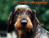 Carlos vom Roggenhof