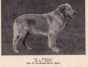 Alf vom Silberstein
