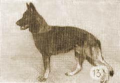 Arko von der Kräuterwiese