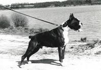 Lasko van de Hazenberg