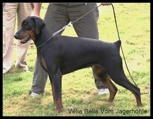 Velia Bella vom Jagerhöhle