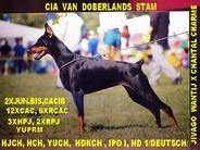 Cia van Doberlands Stam