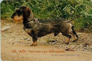 Hannes von Helvesiek
