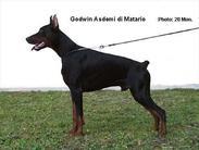 Godwin Asdemi di Matario
