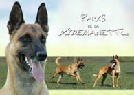 Parks de la Videmanette