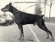 Laudy vom Franckenhorst