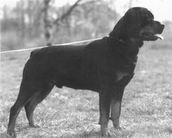 Quwandor van de Hondsrughoeve