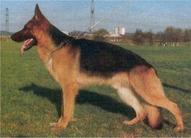 Zigo von der Wienerau