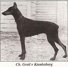 Gretel vom Kienlesberg