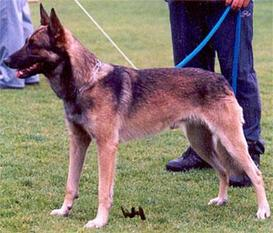 Major des Loups de Champtoise