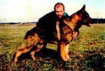 Apoll vom Wolfswappen