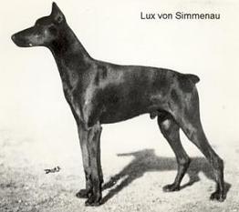 Lux von Simmenau