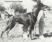 Fresco's Nitscha Ninette