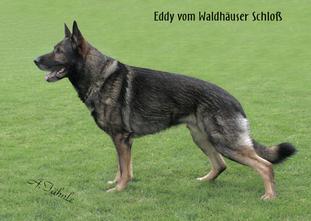Eddy vom Waldhäuser Schloß