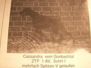 Cassandra vom Gonbachtal