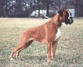 Bo von Canis maior