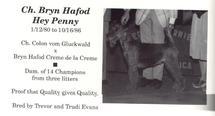 Bryn Hafod Hey Penny