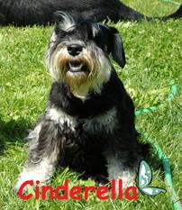 Cinderella von der Spergauer Au`