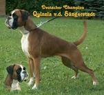 Quinzia von der Sängerstadt