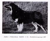 Baldo von Rückertsheim