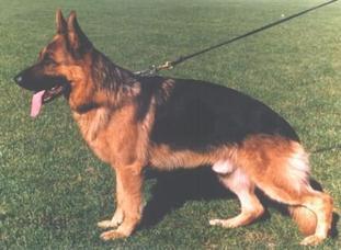 Odin vom Hirschel