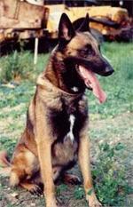 Aramus von den Himmelhunden