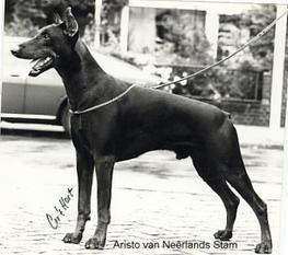 Graaf Aristo van Neerlands Stam