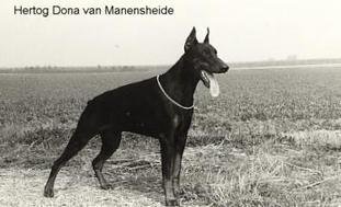 Hertog Dona van Manensheide