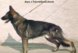Arys z Travnickova dvora CS