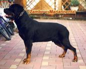 Zambo vom Mariannenthal