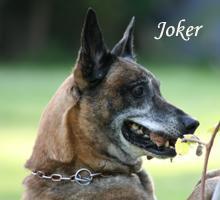Joker von den Zwei M