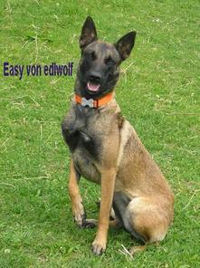 Easy von edlwolf