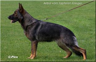 Ariba vom tapferen Krieger