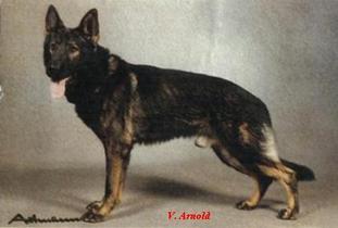 Armin vom Mendele