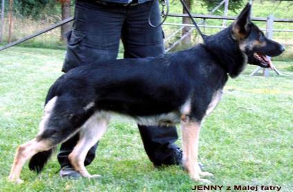 Jenny z Malej Fatry